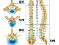 胸腰椎骨折的分类