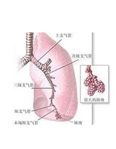 早期肺外表现