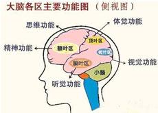 脑发育不全