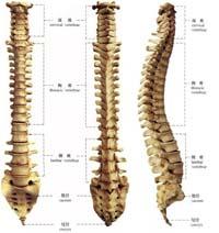强直性脊柱炎与骨科关系